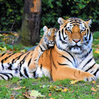 Google 3D Animals: Bring A Virtual Safari To Your House